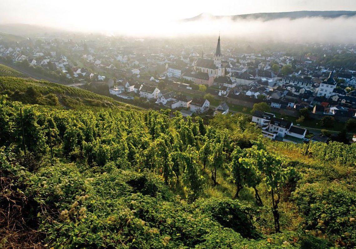 Ahrweiler-Weinberge2-web